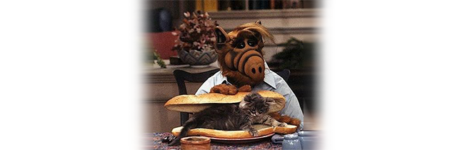 Error 404 Alf Cat
